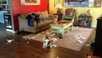 Причины разрушительного поведения собаки
