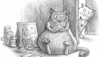 Cтоит ли кормить кошку так часто, как она этого просит?