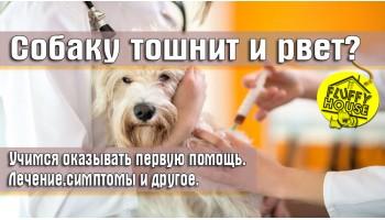 Собаку тошнит и рвёт? Учимся оказывать первую помощь. Лечение,симптомы и другое.