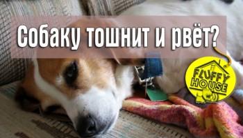 Собаку тошнит и рвёт?