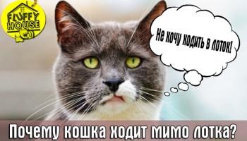 Почему кошка ходит мимо лотка?