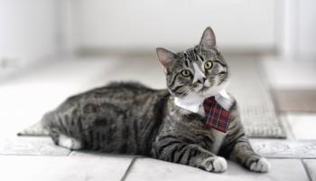 Мочекаменная болезнь у кошек: причины, симптомы, лечение!